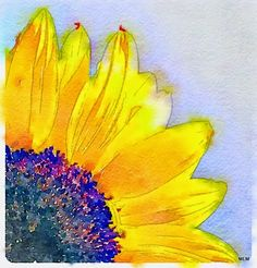Natural Preset in Waterlogue App I think this one is my favorite, which is why it's at the top of this post.-) Still playing with. Watercolor Postcard, Watercolor Cards, Watercolor Paintings, Watercolours, Sunflower Pictures, Sunflower Art, Sunflower Paintings, Watercolor Sunflower Tattoo, Watercolor Flowers
