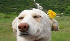 36 fotos de animais que vão fazer você sorrir. A