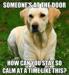 What your dog is thinking...