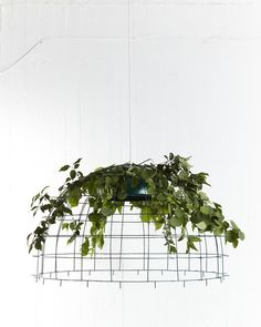 Lina Huring. I love the idea of inverting the plant so it's not contained by the structure / pot / container but cloaking it and almost used as a covering / highlighter for the form beneath it. MK