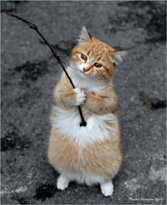 Pretty kitty studying a stick :D <3