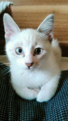 猫を拾ったんだが - http://iyaiyahajimeru.jp/cat/archives/63246