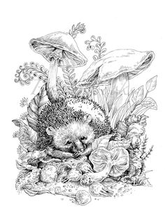 Vintage Classic Coloring Pages: Adult Coloring Book (Relaxing coloring pages, Digital pages, Animals, Flowers, Fairies and More) Fox Coloring Page, Spring Coloring Pages, Horse Coloring Pages, Flower Coloring Pages, Coloring Books, Coloring Sheets, Colouring, Free Halloween Coloring Pages, Free Adult Coloring Pages