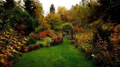 Der Gartenherbst ist jetzt in vollem Gang. ...  Und wenn in den nächsten Tagen wieder etwas Sonne dazukommt, hat er auch ganz viele Farben. Und auch noch Blüten. :-)