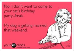 Funny Cry for Help Ecard: No, I dont want to come to your cats birthday party...freak. My dog is getting married that weekend.