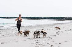 St Bernards, St Bernard Dogs, Dog Pin, Dog Boarding, Dogs Of The World, Nova Scotia, Dogs And Puppies, Dog Lovers, Saints