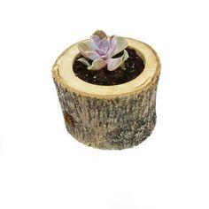 Echeveria Succulent-Sukulent Evde, ofiste, bahçede balkonda kullanıp yeni ev hediyesi olarak yada misafirliğe gittiğinizde götürebileceğinizEcheveria Succulent-Sukulentçiçeği hem görselliği ile hemde…