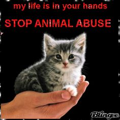 STOP ANIMAL ABUSE! I've made this my mission!