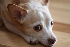 Warning Signs Of Diabetes In Your Dog ... Diabetes is a growing epidemic among dogs, and unfortunately, an uncurable one. By recognizing the early symptoms of diabetes, you can prevent further symptoms and create a better life for your dog. ... #pets #petcaretips #animals ... PetsLady.com