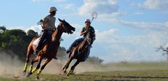 Gathering with all the top Polocrosse players at Antelope Park. Park, Tops, Parks