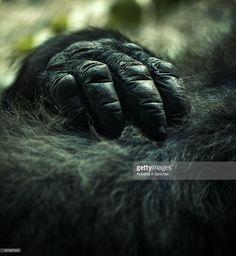 gorilla hand - Google Search