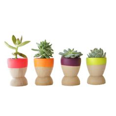 These dipped tiny planters are so bright and cheerful!