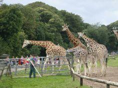 Cork- Fota Wildlife Park