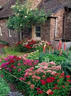 The Bothy Garden with Sweet Williams in beds and Rosa 'Iceberg' on wall - Cefntilla