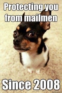 Hispanic Meme | chihuahua protecting you from mailman