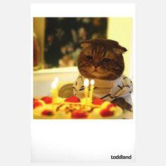 Fab.com | Birthday Cat