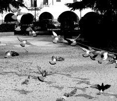 Fuga - © 2007 - Niccolò Matterazzo