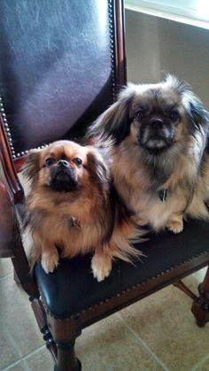 Kipu & Zenji: loving their chair by the window