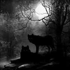 I am for wolves