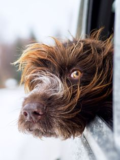 Professional photographer, specializing in dog and pet portraiture. Beautiful Dogs, Animals Beautiful, Cute Animals, Funny Animals, I Love Dogs, Cute Dogs, Griffon Dog, Dog Heaven, Dog Rules