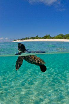 Pom Pom Island Resort, Sabah, Malaysia - Official Site