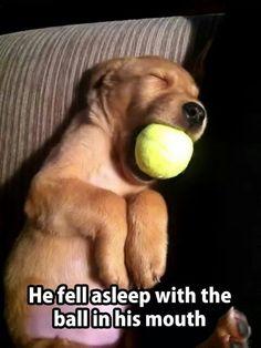 Silly puppy