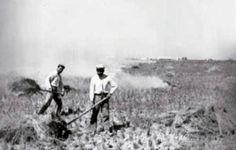 El trabajo de campo se terminaba amontonanado los rastrojos y prediéndoles fuego dejano el campo limpio para empezar a arar en cuanto estuviese el terreno seco.