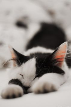 """""""Only cat lovers know the luxury of fur-coated, musical hot-water bottles that never go cold."""" --Susanne Millen"""