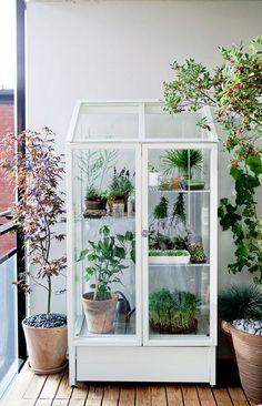 una serra in casa per le piantine aromatiche?