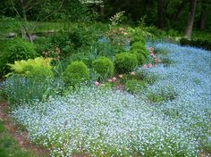 Like the blue flowers, but what are they and how do the plants look when not in bloom?  Garden design in Devon, PA Spring Display of Mixed Border Planting