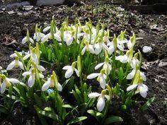 Тенелюбивые растения: фото и названия теневыносливых цветов и тенелюбивых многолетников для сада и дачи