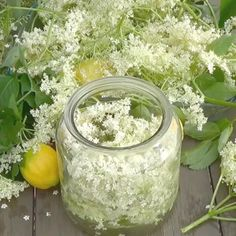 Combined with still or sparking water, this wonderfully refreshing drink is simple and inexpensive to prepare from freshly picked flowers. Elderflowers are an excellent antiviral used for detoxification, asthma and allergy treatment. Refreshing Drinks, Yummy Drinks, Healthy Drinks, Healing Herbs, Medicinal Herbs, Elderflower Cordial, Elderberry Recipes, Herbs For Health, Medicinal Plants