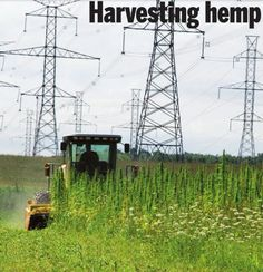 Canadian Hemp Farm.