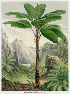 1845 Louis Van Houtte Flores de Serres Cactus, Bromeliad & Palm Tree Prints