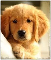 Resultado de imagen de imagenes de cachorros tiernos y bonitos