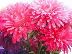Resultado de imagen para bellas flores