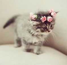 Beautiful Kitten wearing a rose headband