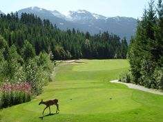 Canadian Golf - Chateau Whistler Golf Club, Whistler, British Columbia,