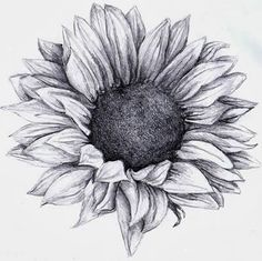 Sunflower, my absolute favourite flower. Would look beautiful as a tattoo. (: