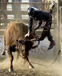 bull riding - Google Search