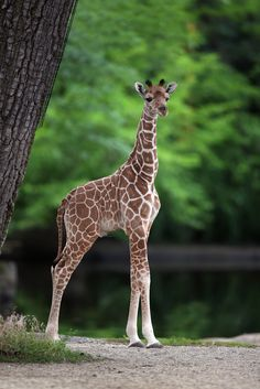 3. Stay fabulous. | Let's Celebrate The Four-Day Weekend With Baby Giraffes