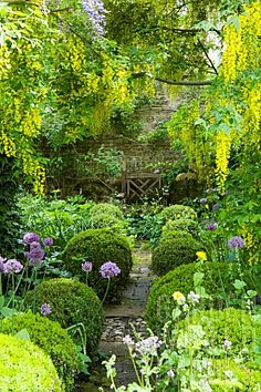 Barnsley House gardens, featuring allium purple sensation planted beneath auburn archway + lots of other rooms Garden Shrubs, Garden Landscaping, Garden Path, Small Gardens, Outdoor Gardens, English Garden Design, Home And Garden Store, The Secret Garden, Garden Cottage