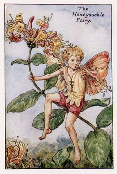 Honeysuckle Flower Fairy, c.1927, by Cicely Mary Barker