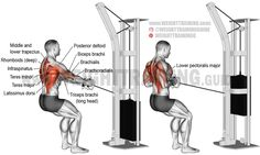 Standing cable row exercise instructions and video Standing cable row. Target muscle: None; the back in general (see synergists). Synergists: Latissimus Dorsi, Teres Major, Infraspinatus, Teres Minor, Middle and Lower. Cable Workout, Squat Workout, Gym Workout Tips, Weight Training Workouts, Squat Exercise, Training Exercises, Workout Challenge, Good Back Workouts, Back Exercises
