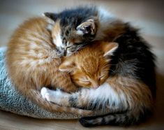Cute Kitten love