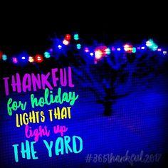 Holiday lights brighten the yard for the doggies!  #365thankful2017 #365 #thankful #thankfulthursday #gratitude #lights #holidaylights #dogs #yardlights