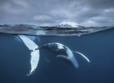 Spectacular Whale Photography by Audun Rikardsen