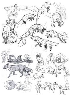 Drawing tips, drawing reference, drawing techniques, drawing ideas, cute dr Animal Sketches, Animal Drawings, Drawing Sketches, Drawing Tips, Drawing Ideas, Drawing Drawing, Tattoo Sketches, Drawing Animals, Animal Illustrations