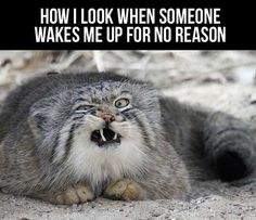 When someone wakes me up…