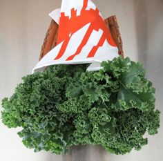 food saver trick Herbs, Food, Herb, Meals, Yemek, Eten